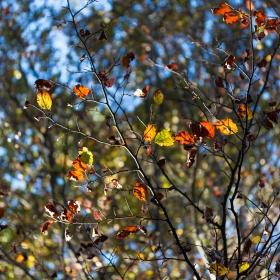 Sylvain Charletty - 18 octobre 2014 - _MG_5774.jpg